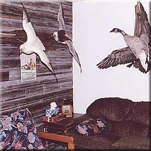 goose-hunting-manitoba-011